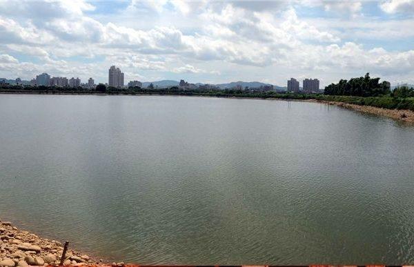 桃園市1-4號埤塘將成為原生魚類、水生植物等多樣生態示範埤塘(攝影:徐乃義/大紀元)