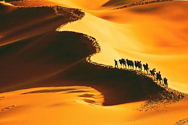 《穿越沙漠》:这是一幅传统复合式的构图画面, 阳光把沙丘隔开了明与暗的面,分界线正好在画面的对角线上,就使得画面看起来平稳均衡,而那条分隔线又是曲线型的,构成S 型构图,使画面看起来有音乐的韵律生动。还有驼队在黄金点上,使得在大漠中的主体突出出来。整个画面暗部有层次,亮部也有层次,质感很好。这些都是传统的 构图法则在画面中的应用。(伊罗逊评历届摄影大赛获奖作品)