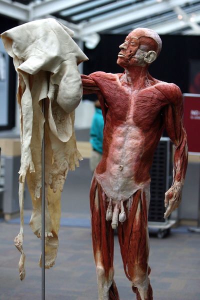 """大连""""冯•哈根斯生物塑化公司""""近几年在全球进行""""人体世界""""的尸体巡回展览,但至今仍无法说清展览的尸体来源。图为,2008年4月到9月在美国洛杉矶的展览。(AFP PHOTO / GABRIEL BOUYS)"""