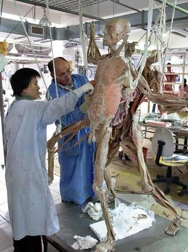 尸体加工厂。(网络图片)