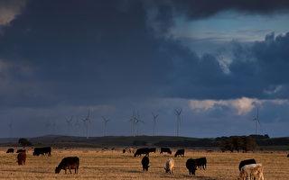 澳政府批准将卡比农场售与中方主导财团
