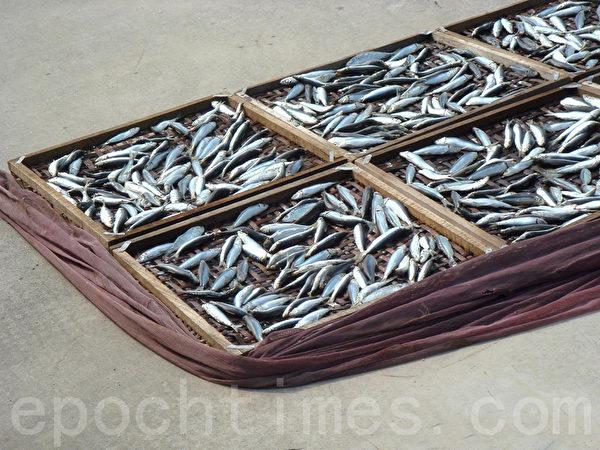 蒸熟的鱼体尚湿会沾黏沙粒,需用鱼网框住木盘防风沙。(摄影:林秀霞 / 大纪元)