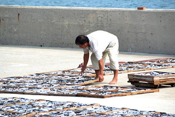 第二天鱼体晒干了就不会沾黏沙粒,鱼体上的沙粒可轻轻敲下。(摄影:林秀霞 / 大纪元)