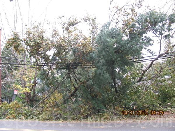 颶風刮斷的大樹砸斷了電線(攝影:唐超/大紀元)