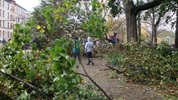圖為紐約展望公園的樹木被颶風刮倒。(由郭曼麗提供)