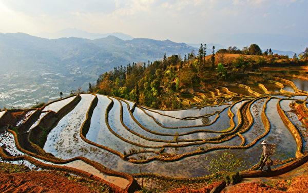 图﹕风光自然类铜奖作品《黄金梯田》﹐作者为台湾的黄裕培。