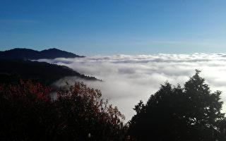 秋季的阿里山,常因山顶冷空气沉降与山谷上升暖空气所造成的隔热效应,形成波涛汹涌宛如辽阔海洋的云海景致,令人惊艳。(嘉义林管处提供)