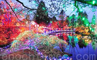 组图:温哥华圣诞灯饰璀璨 宛如梦幻
