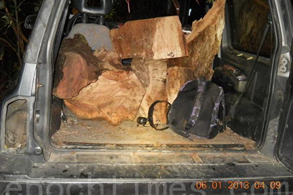 图为嫌犯用吉普车乘载牛樟木。(图片林管处提供)