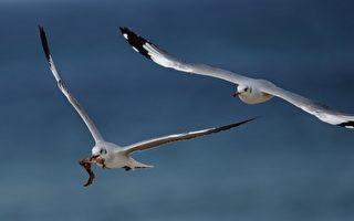 許其正:海鷗三唱