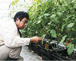 """善用科学,吴庆钟以""""菌相管理营养满足栽培法""""适时提供植物不同时期需要的养分,让叶片及果实都能够营养满足。"""