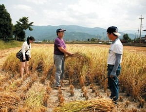 吴庆钟(中)带领民众体验手工割稻的辛劳。(吴庆钟提供)