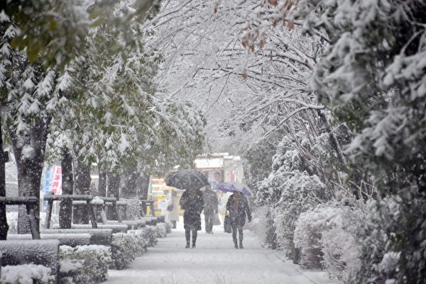 2013年1月14日,东京都心降下今年冬天第一场雪。(Yoshikazu TSUNO/AFP)