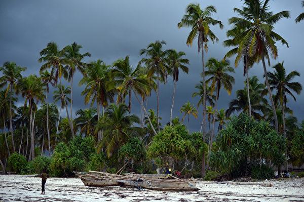 桑吉巴海滩椰林。(GABRIEL BOUYS/AFP)