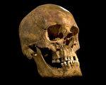 去年在英格兰列斯特市一处停车场所发现的骸骨2月4日证实为英格兰国王理查三世(Richard III)的遗骸。图为遗址发现到的骷髅头骨。(UNIVERSITY OF LEICESTER/AFP)