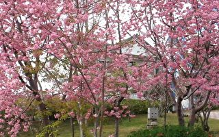民宿庭园里盛开的粉红色桃花。(摄影:廖素贞/大纪元)