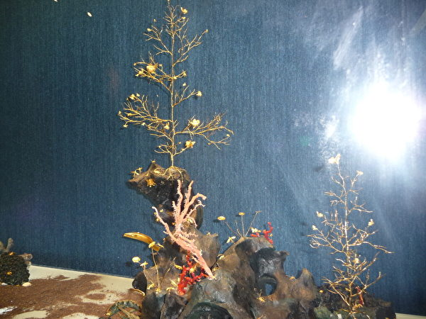 金樹另具風貌。  (攝影:蘇泰安/大紀元)