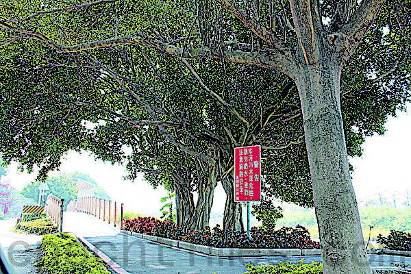 东螺溪自行车道沿途可欣赏田园风光。(摄影:郭益昌/大纪元)