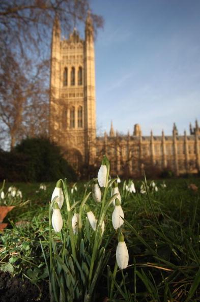 2009年1月30日在英國倫敦國會大廈前的雪花蓮。(Dan Kitwood/Getty Images)