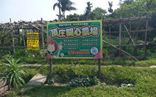 开心农场茶叶渣堆肥再利用