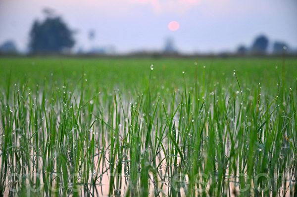 害羞的太阳(摄影:明国/大纪元)