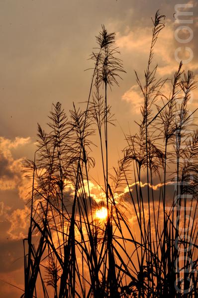 黎明的太阳(摄影:明国/大纪元)