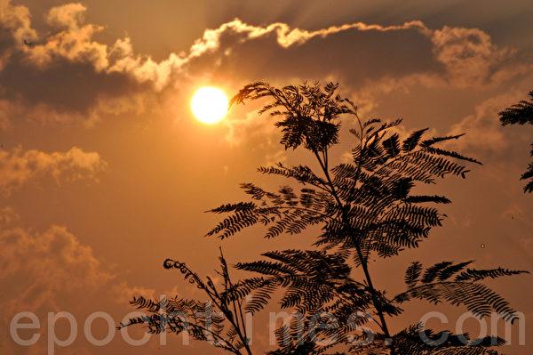 太阳和树影互相衬托(摄影:明国/大纪元)