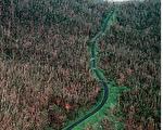 """常目击具有绿色血液外星人和幽浮出现的波多黎各""""爱尔洋奎""""(El Yunque)山地。(Jose Jimenez/Primera Hora/Getty Images)"""