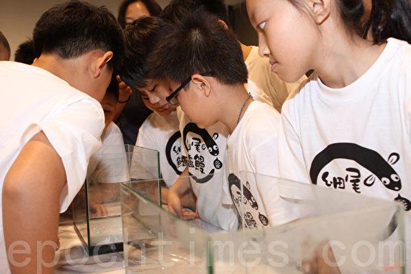 頭城國小的小朋友們一面聽老師的解說,同時專注觀察魚缸內「小鰻魚」。(攝影:曾漢東/大紀元)
