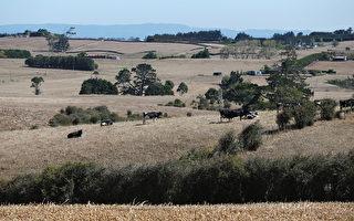 組圖:30年來首見 紐西蘭北島大旱