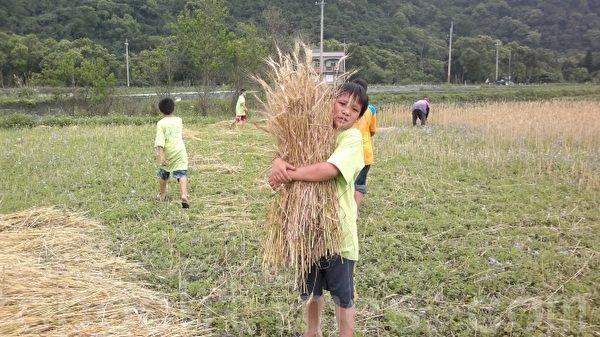 碧候国小采收小麦。(黄仕聪提供)