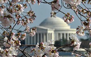 一年一度的樱花节被称为美国首都华盛顿特区最浪漫的节日。周六(3月23日),官方举行开幕典礼,但由于今年天气寒冷,樱花迟迟未开;官方预测今年观赏樱花的最佳日期将延迟到4月3日至6日。 (Photo by Getty Images)