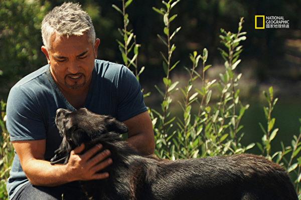 狗行為專家西薩‧米蘭(Cesar Millan)設法解決全球狗狗被棄養的問題。(圖/國家地理野生頻道提供)