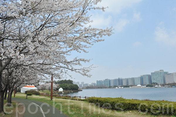 韓國高陽市一山湖水公園春天景色。(攝影:鄭仁權/大紀元)