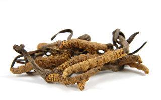 冬蟲夏草長久以來被認為具有健康功效,是珍貴的稀有藥材。(Fotolia)