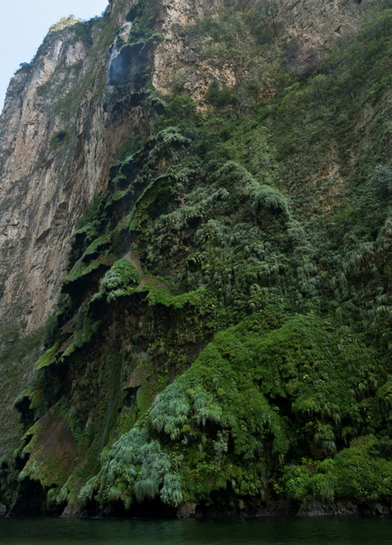 """苏米德罗大峡谷悬崖峭壁上的""""圣诞树""""。(Ronaldo Schemidt/AFP)"""
