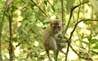 轮回报应:取笑僧人犯恶语罪 转生猿猴
