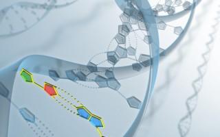 DNA分析显示该骨骼是人类。(Fotolia)