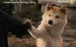 俄羅斯洪水中傳出感人忠犬的故事。(圖:新唐人)