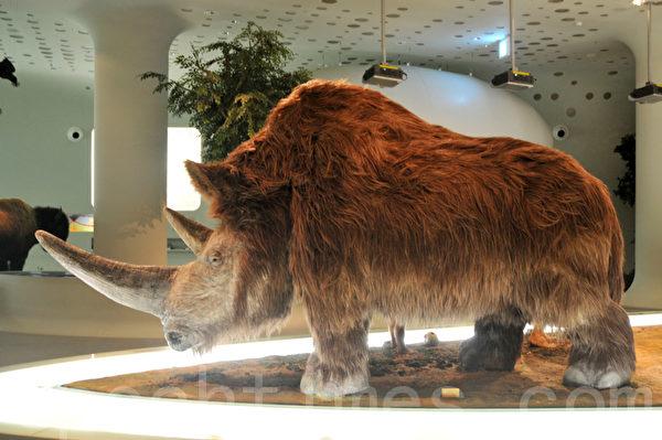 全谷里先史博物馆内远古时候的大犀牛 (摄影: 明国/大纪元)