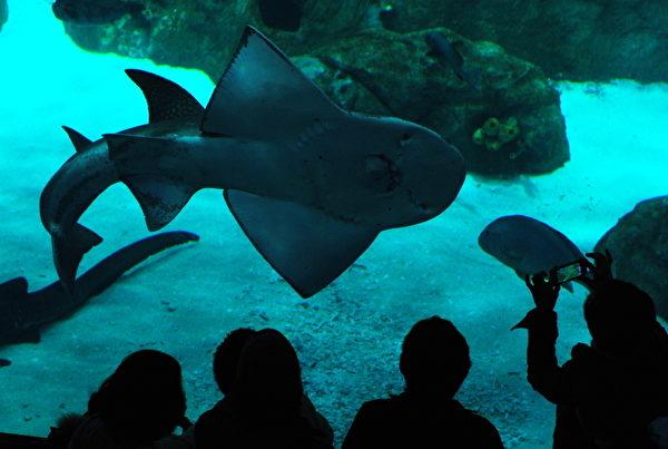 香港海洋公园水族馆 (MIKE CLARKE/AFP)