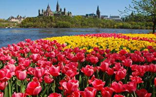 5月18日~5月24日渥太華好去處