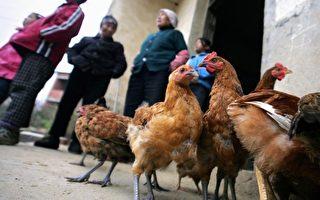 中國市場發現H7N7病毒 更易感染給人