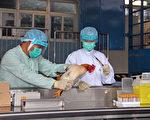 全球首例H7N9人传人 医学界忧大陆瞒疫情