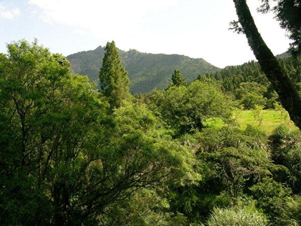阿里山遊樂區內蒼翠樹林內在防疫措施下,遊客在賞玩之際需遵守園方的相關規定。 (攝影:蘇泰安/大紀元)
