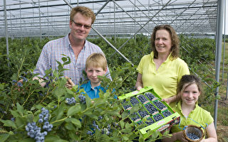 比利时Schrijnwerkers蓝莓园主人,Schrijnwerkers夫妇和孩子们。(Schrijnwerkers蓝莓园提供)