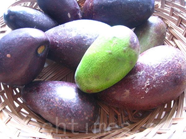 要让酪梨的颜色从深绿变成深紫色,须放置几天。(摄影:杨美琴/大纪元)
