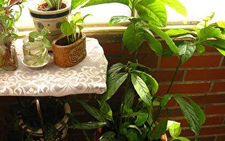 有香氣的室內盆栽  淨化空氣還能增加睡意
