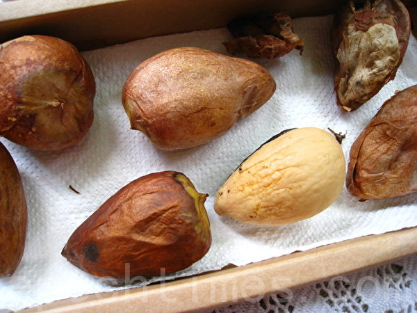 每个酪梨都有一颗大种子,可别丢掉,不妨将种子外壳剥去,尖处朝下浸在水盘或泥土中,待长出芽及根后,就是一株漂亮挺拔的室内观赏盆栽! (摄影:杨美琴/大纪元)
