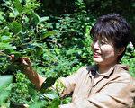 韓國江原道「安正淑平昌野生五加皮株式會社」的代表安正淑。(全宇/大紀元)